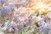 Fanfic / Fanfiction A flor da Cerejeira - Interativa
