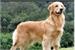 Fanfic / Fanfiction Vida de um cachorro - interativa
