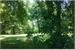 Fanfic / Fanfiction Entre as árvores
