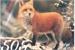 Fanfic / Fanfiction Foxys-Mitw