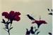 Fanfic / Fanfiction A flor e o beija-flor