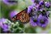 Fanfic / Fanfiction Like a Butterfly