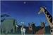 Fanfic / Fanfiction Mohatu: A Estrela mais brilhante do céu