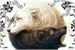 Fanfic / Fanfiction My ômega perfeito ~ yoonmin
