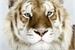 Fanfic / Fanfiction A Irmã do Tigre