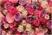 Fanfic / Fanfiction As rosas na escuridão