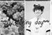 Fanfic / Fanfiction My boring dog - Jungkook