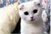 Fanfic / Fanfiction O Gato De Olhos Negros