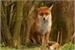Fanfic / Fanfiction Vida de uma raposa