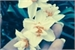 Fanfic / Fanfiction Narcissus