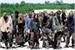 Fanfic / Fanfiction The Walking Dead - Interativo