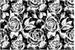 Fanfic / Fanfiction Novas Rosas - interativa