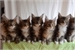 Fanfic / Fanfiction Os 7 Gatinhos