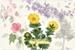 Fanfic / Fanfiction Os casos florais de Lee Jaehwan