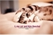 Fanfic / Fanfiction I, my cat and Kim Heechul