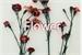 Fanfic / Fanfiction Flower
