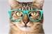Fanfic / Fanfiction Meu adorável gato