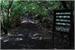 Fanfic / Fanfiction Aokigahara: A Floresta dos Suicídas