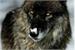 Fanfic / Fanfiction Entre lobos , vampiros e bruxos