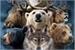 Fanfic / Fanfiction Mystic Animals (Interativa)