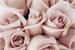 Fanfic / Fanfiction Quando as rosas cantaram