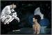 Fanfic / Fanfiction Under The Moon- Fanfic Jikook