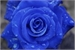 Fanfic / Fanfiction A Rosa Azul