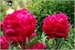 Fanfic / Fanfiction Clethra Arnifolia