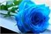 Lista de leitura Eldarya/Amor Doce