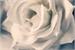 Fanfic / Fanfiction A pequena rosa morta