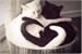 Fanfic / Fanfiction Cat's love