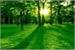 Fanfic / Fanfiction O Grande Bosque
