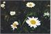 Fanfic / Fanfiction Flores