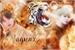 Fanfic / Fanfiction Jaguar Dourado