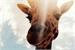 Fanfic / Fanfiction Uma girafinha me deu oi