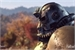 Fanfic / Fanfiction Naruto DxD: Fallout 76