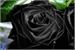 Fanfic / Fanfiction Rosa negra