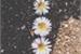 Fanfic / Fanfiction A flor da idade