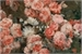 Fanfic / Fanfiction Cherry Blossoms.