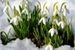 Fanfic / Fanfiction Do frio até a flor