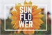 Fanfic / Fanfiction Sunflower P.Coutinho