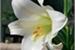 Fanfic / Fanfiction Plastic lily (JeongCheol)