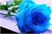 Fanfic / Fanfiction Blue Rose