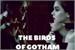 Fanfic / Fanfiction The Birds of Gotham