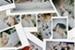 Fanfic / Fanfiction Instagram - Interativa ( VAGAS FECHADAS )