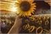 Fanfic / Fanfiction Gold Girassol I:A aventura começa