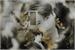 Fanfic / Fanfiction Atrás das grades (Hot - Jeon Jungkook)