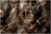 Fanfic / Fanfiction Teen Wolf: New Beginning