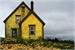 Fanfic / Fanfiction .flower house