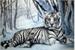 Fanfic / Fanfiction Minha Tigresa Branca- Imagine Jungkook